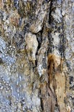 Lluvia Forest Tree Bark Textures Foto de archivo libre de regalías