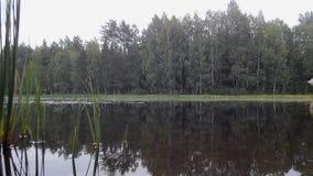 Lluvia ligera en un lago del bosque almacen de video