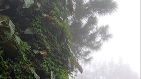 Lluvia, niebla, niebla sobre fondo del árbol y de la vegetación o el vídeo del título metrajes
