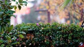 Lluvia que cae en las flores en jardín almacen de video