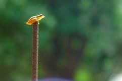 Lluvia que espera de la pequeña rana para imagen de archivo