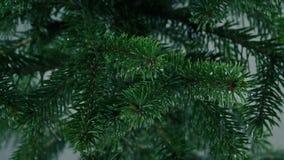 Lluvia que gotea del primer de las ramas de árbol almacen de video