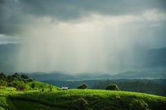 Lluvia sobre campo de arroz Imagenes de archivo