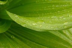 Lluvia sobre el detalle de las hojas Fotografía de archivo libre de regalías