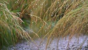 Lluvia tropical con película de la vegetación metrajes