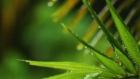 Lluvia tropical de la cámara lenta almacen de metraje de vídeo
