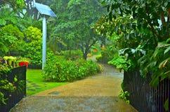 Lluvia tropical del jardín imagen de archivo