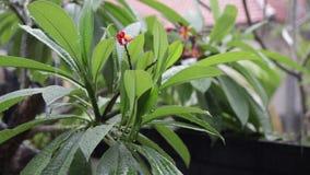 Lluvia tropical en el jardín al aire libre Fondo verde y gris exótico Isla de Bali, lloviendo la estación indonesia metrajes