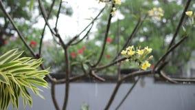 Lluvia tropical en el jardín al aire libre Fondo verde y gris exótico Isla de Bali, lloviendo la estación indonesia almacen de video