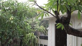 Lluvia tropical en el jardín al aire libre Fondo verde y gris exótico Isla de Bali, lloviendo la estación indonesia almacen de metraje de vídeo