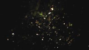 Lluvia tropical en la tormenta de la noche y lluvia en el viento tropical de Asia metrajes