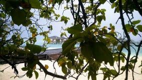 Lluvia tropical en los Maldivas metrajes