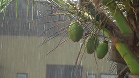 Lluvia tropical pesada en la isla durante el día almacen de video