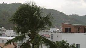 Lluvia tropical sobre la ciudad almacen de metraje de vídeo