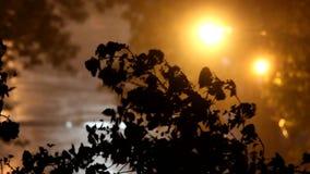 Lluvia y árbol metrajes