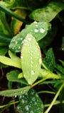 Lluvia y hoja Fotos de archivo