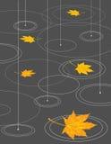 Lluvia y hojas de arce Imagen de archivo libre de regalías