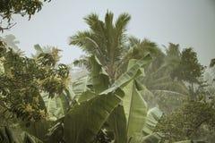 Lluvias de la monzón en Sri Lanka Foto de archivo libre de regalías