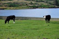 Llyn Cwmystradllyn Stock Photography