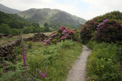 Llyn Dinas Valley near Beddgelert Royalty Free Stock Image