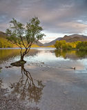 Llyn Padarn. Is a glacially formed lake in Snowdonia, Gwynedd, north Wales, and is an example of a moraine dammed lake. The lake is approximately 2 miles (3.2 royalty free stock photo