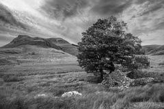 Llyn y Dywarchen湖的黑白晚上风景图象 免版税库存照片
