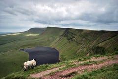 Llyn y fanfach, den welsh sjön i Brecon leder nationalparken Royaltyfri Foto