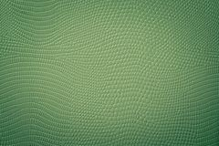 Green Neutral Snake Skin Texture Royalty Free Stock Images