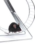 Lmouse on an exercise wheel Royalty Free Stock Images
