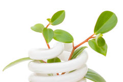 Lámpara ahorro de energía con la planta de semillero verde Imagen de archivo
