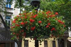 Lámpara con las cestas de la flor de la ejecución Fotografía de archivo libre de regalías