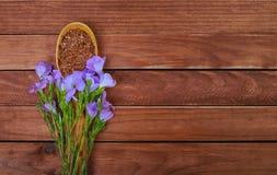 Lnów ziarna w drewnianej łyżce z linum Lin i roślinami kwitną Obraz Stock