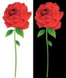 Línea arte de la floración de Rose Fotos de archivo libres de regalías