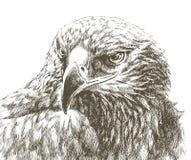 Línea arte del águila Imagen de archivo libre de regalías
