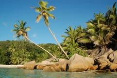 Línea de la playa y palmas tropicales Imagenes de archivo