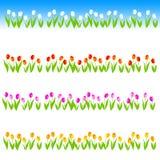 Línea/divisor del tulipán Imagenes de archivo