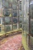 LNK Infotree vid Karosas Europos anoraker vilnius lithuania Royaltyfri Bild