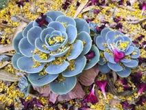 Lío hermoso y colorido de la puntilla Imagen de archivo libre de regalías