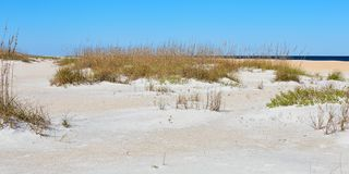 A lo largo de la playa en Anastasia State Park, la Florida foto de archivo