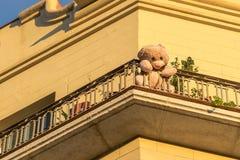 A lo largo de oso de peluche se está sentando en el balcón soleado entre houseplants Imagenes de archivo