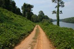 A lo largo del camino del kudzu fotografía de archivo
