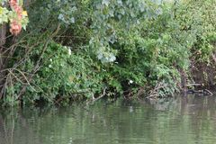 A lo largo del río Saone en Francia Imagen de archivo