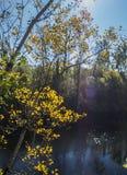 A lo largo del valle de la porción del río Imagen de archivo