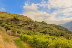 Lo scenario della viticoltura naturale di Carema, Piemonte, Italia Fotografia Stock Libera da Diritti