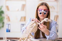 Lo scheletro animale d'esame dello studente in aula Fotografia Stock
