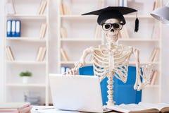 Lo scheletro dello studente che prepara per gli esami Immagine Stock
