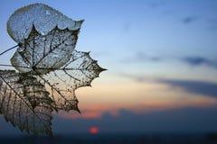 Lo scheletro trasparente di autunno lascia il fondo immagini stock libere da diritti