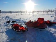 Lo sci di fondo nel lappland con pulken Immagine Stock Libera da Diritti