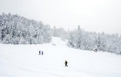 Lo sci pende nella foresta di conifere 'nella stazione sciistica della montagna di Kolasin 1450' Immagine Stock