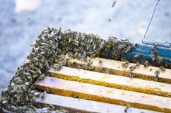 Lo sciame delle api accanto alla prova Trappola della trappola Sciame delle api Immagine Stock Libera da Diritti